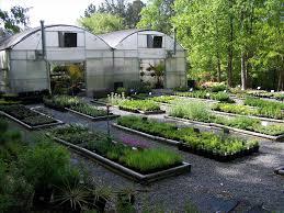 native plant nursery uncategorized darxxidecom