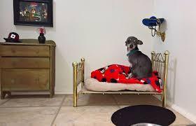 chambre pour chien construit une chambre pour chien sous l escalier