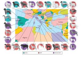 Sardinia Map Genome Of Fiercely Protective Fonni U0027s Dog Reflects Human History