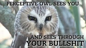 Owl Birthday Meme - cool 20 hilariously adorable owl memes gotta love memes testing