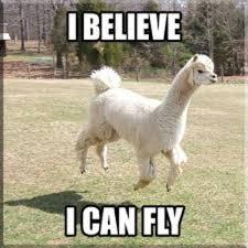 Llama Meme - shaved llama meme llama best of the funny meme
