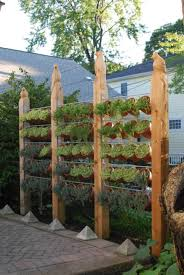 vertical vegetable garden fence growing a vertical vegetable