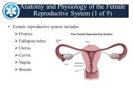 Female Breast Anatomy And Physiology Chapter 21 Obstetrics U0026 Neonatal Care Patient Assessment U0026 Care