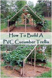 best 25 cucumber trellis ideas on pinterest permaculture