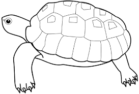 sea animals coloring pages 6756