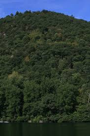 mountain free stock photo a tree covered mountain 11937