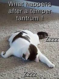 Tired Cat Meme - tired kitty i can has cheezburger funny cats cat meme cat