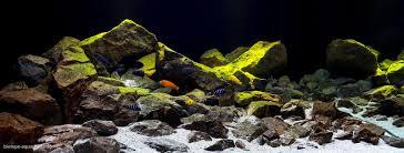 biotope aquarium design contest 2016 u2013 biotope aquarium