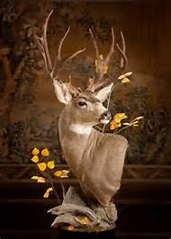 Deer Pedestal Best 25 Ideas About Deer Mounts Find What You U0027ll Love