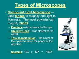 compound light microscope uses tooth with plaque magnification 10x ppt download
