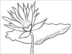 Simple Lotus Flower Drawing - drawings of lotus blossoms