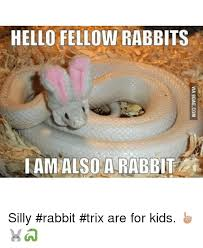 Silly Rabbit Meme - hello fellow rabbits iam also a rabbit silly rabbit trix are for