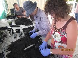 propagating australian native plants propagation teamwork benefits plunkett regeneration friends of