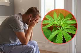 Herb Robert Pictures Getty Images Yeovil Who Used Cannabis To Help Him Out By