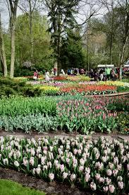 flower garden in amsterdam dellbell travels keukenhof flower garden easter blossoms