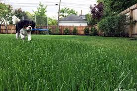 dog friendly garden ideas we know stuff