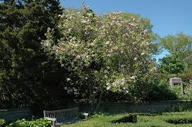 magnolia magnolia in inver grove heights minnesota