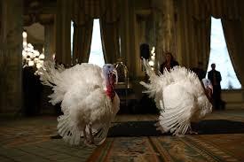happy thanksgiving barack obama cracks corny jokes at