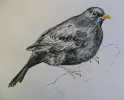 bird sketches agnesandcora