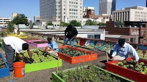 atlanta homeless shelter producing pounds of veggies on rooftop
