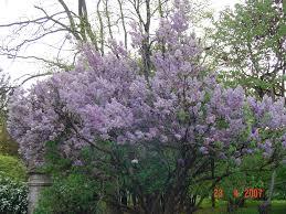 flowering trees photos