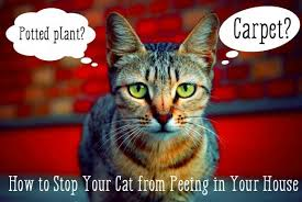 My Cat Peed On My Bed How To Stop Your Cat From In The House Pethelpful