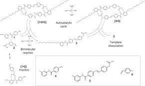 autonomous model protocell division driven by molecular