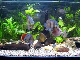 cuisine aquarium design u2013 free wallpaper download saltwater