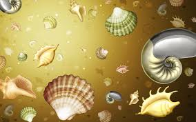 assorted seashells assorted seashells illustration hd wallpaper wallpaper flare