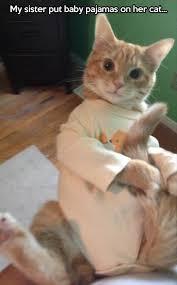 Nighty Night Meme - nighty night fluffy cat imgur