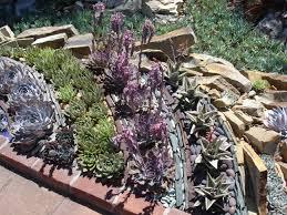 rock garden cactus champsbahrain com