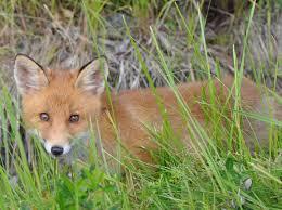 photo u0026 wildlife edens garden bed u0026 breakfast cottages and