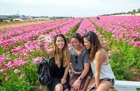 carlsbad flower garden how to see the popular flower fields in carlsbad u2013 orange county
