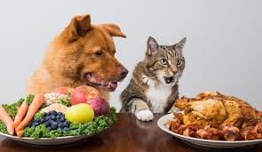 thanksgiving dog human food your pet can and cannot eat