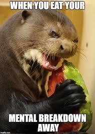 Otter Memes - self loathing otter memes imgflip
