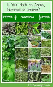 herb growing chart fresh herbs annual biennial or perennial the gardening cook