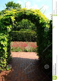 vines on archway trellis stock photography image 14566642