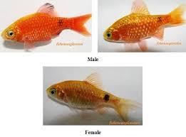 ornamental fish varieties in india aquarium images