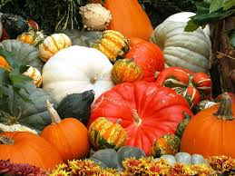 my free wallpapers nature wallpaper halloween pumpkin festival