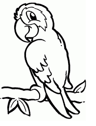 download coloring pages parrot coloring page parrot coloring