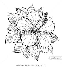 coloring pictures of hibiscus flowers hawaii hibiscus flower leaf aloha hawaii stock vector 339236351