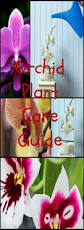 Orchids Facts by The 25 Best Orchid Plant Care Ideas On Pinterest Orchid Plants