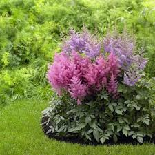 Flower Shrubs For Shaded Areas - astilbe along rock wall down to patio u0026 near back fence area
