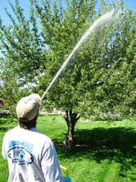 organic tree care service aphids on fruit trees boulder