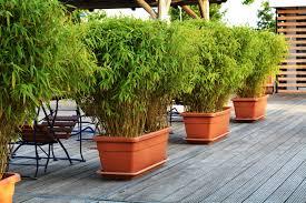 balkon sichtschutz balkonsichtschutz aus bambus als pflanze oder bambusmatte