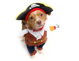 Dogs Halloween Costume 15 Hilarious Halloween Costumes Dogs Dog U0027s