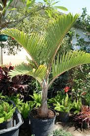 exterior design inspiring unique garden plant ideas with