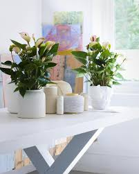 Modern Houseplants by Design Beautiful Indoor Plants Ideas 23180