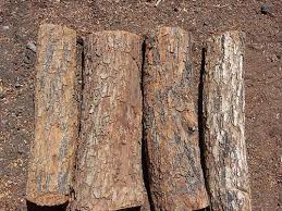types of wood paul bunyans firewood