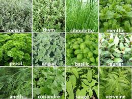 les herbes de cuisine herbes aromatiques en cuisine with herbes aromatiques en cuisine